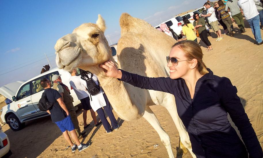 Abu Dhabi Camel