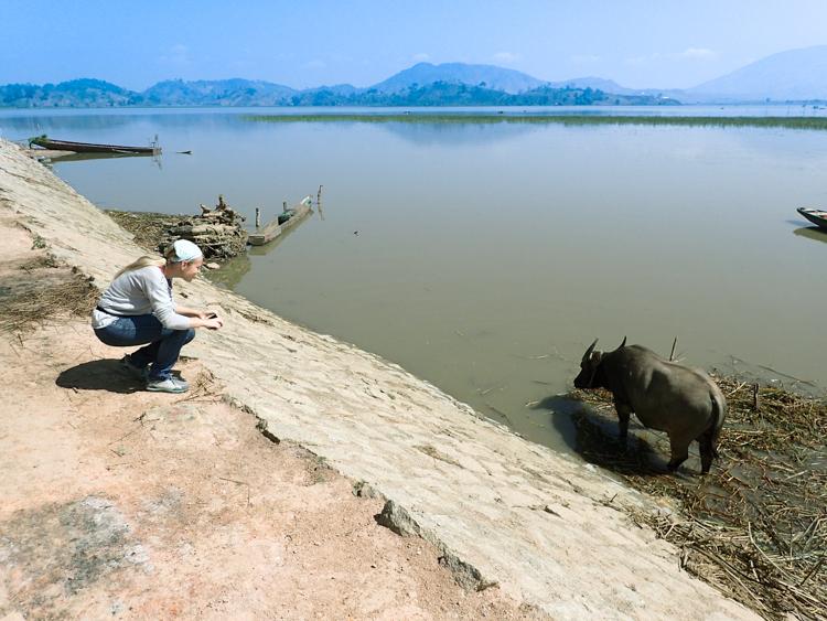 Water buffalo in Lak Lake Vietnam