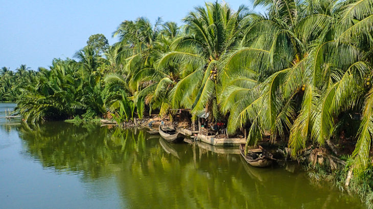Palm Trees in the Mekong Delta Vietnam