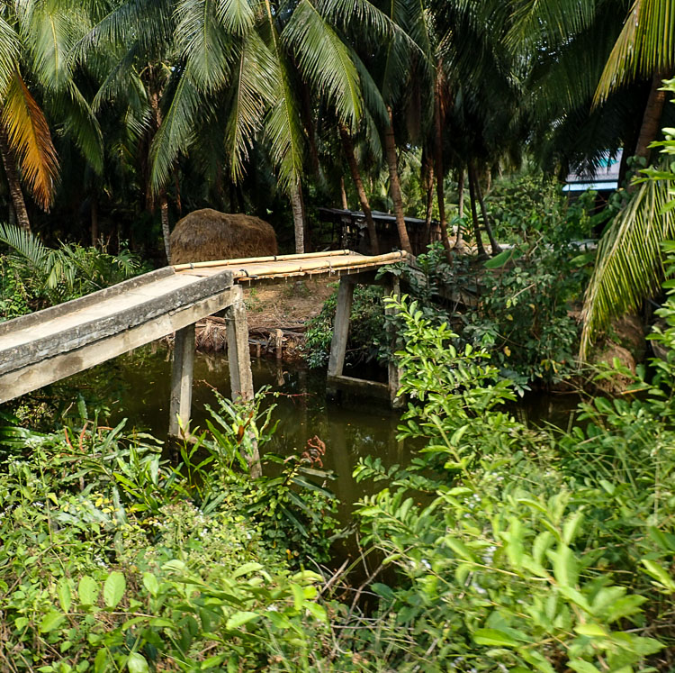A tiny bridge across a canal in the Mekong Delta