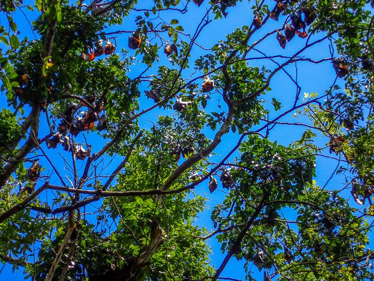 Bats at Dimakya Island