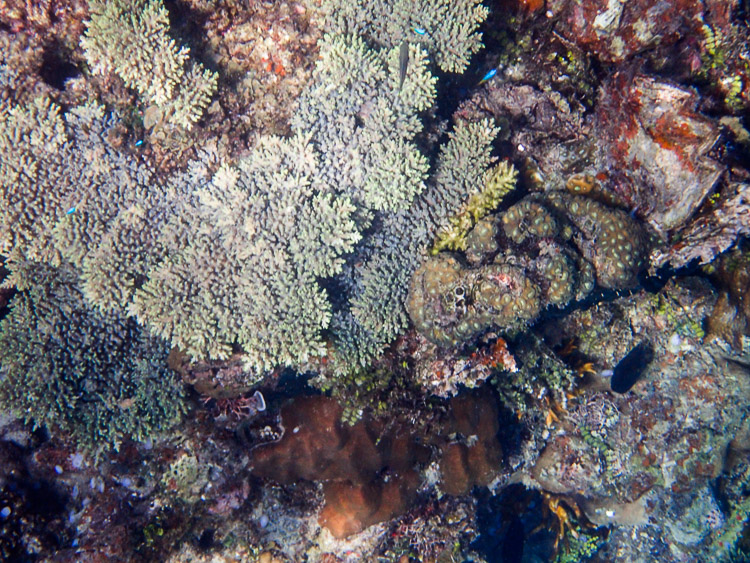 Coral in Palawan, Philippines